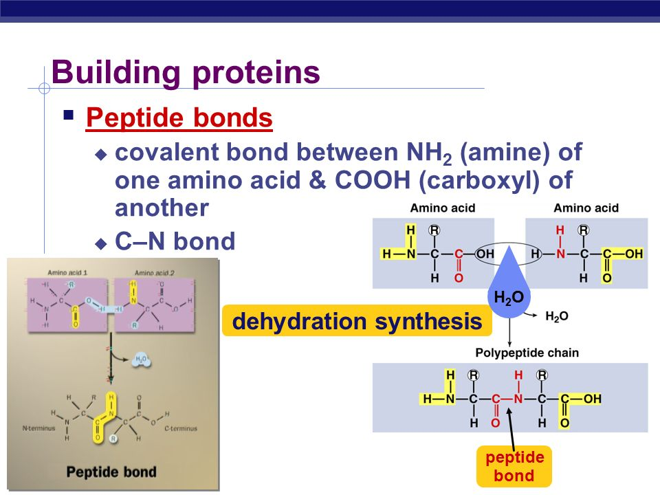 Proteins. - ppt download