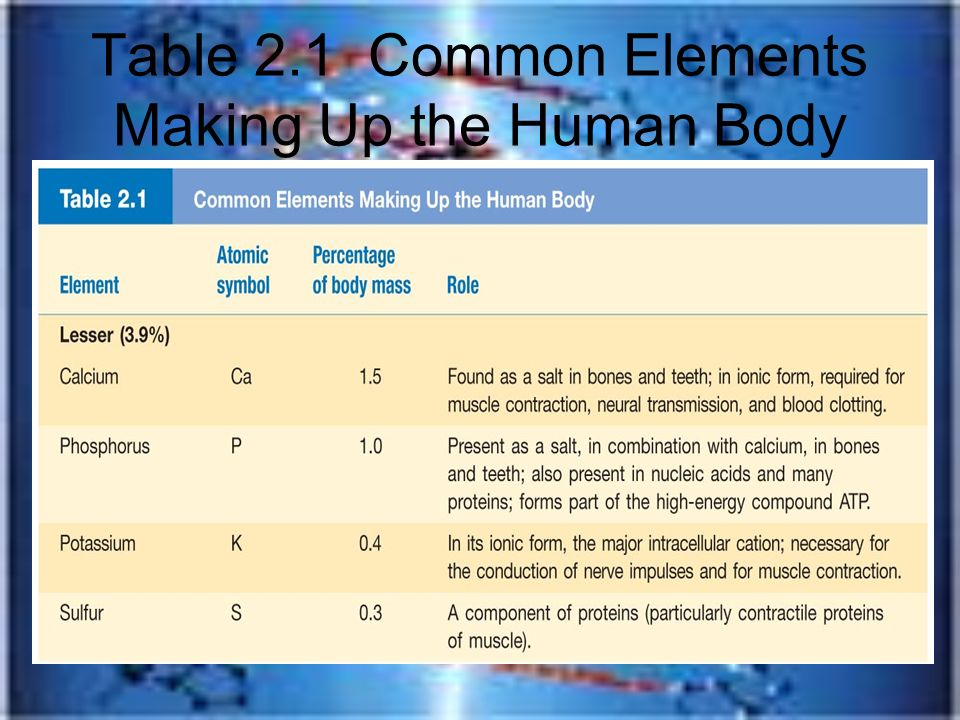 Human Anatomy Amp Physiology Ppt Download
