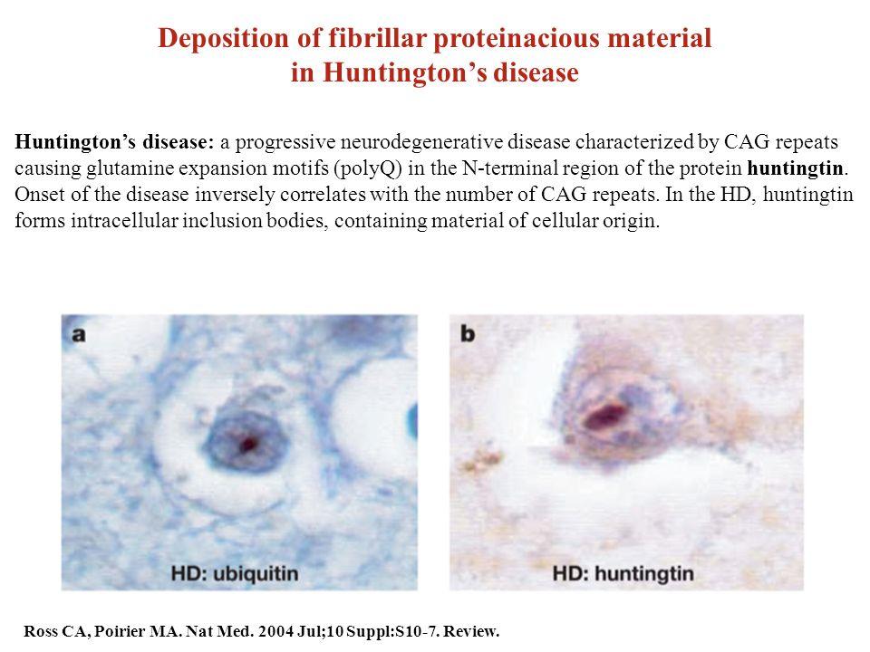 proteine fibrilare
