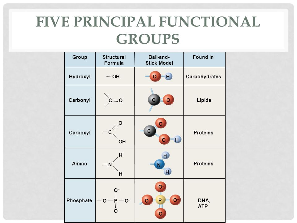 Phosphate Functional Group The Molecules of Life ...
