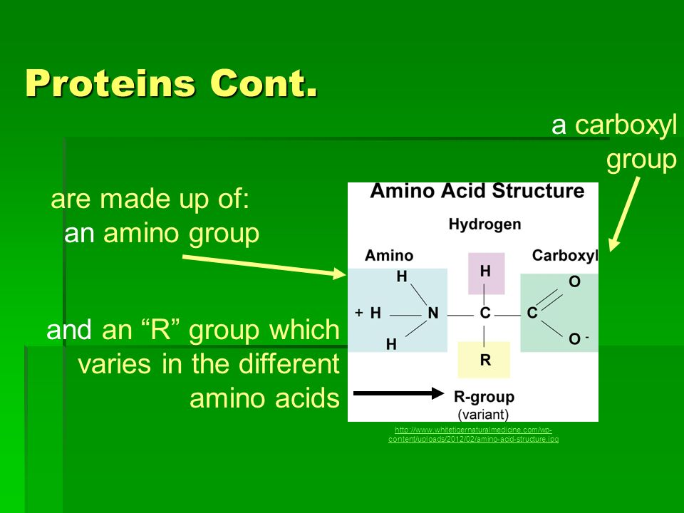 Proteins Cont. a carboxyl group are made up of: an amino group