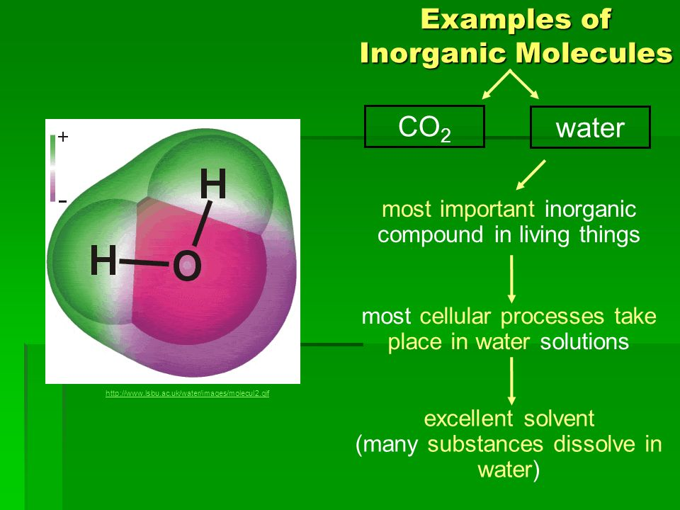 Biological molecules what are the building blocks of life worksheet answers pogil