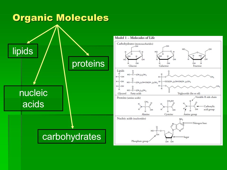 Organic Molecules lipids proteins nucleic acids carbohydrates