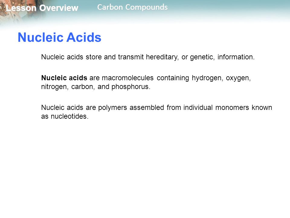 Nucleic Acids Nucleic acids store and transmit hereditary, or genetic, information.