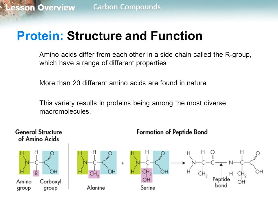 Protein: Structure and Function
