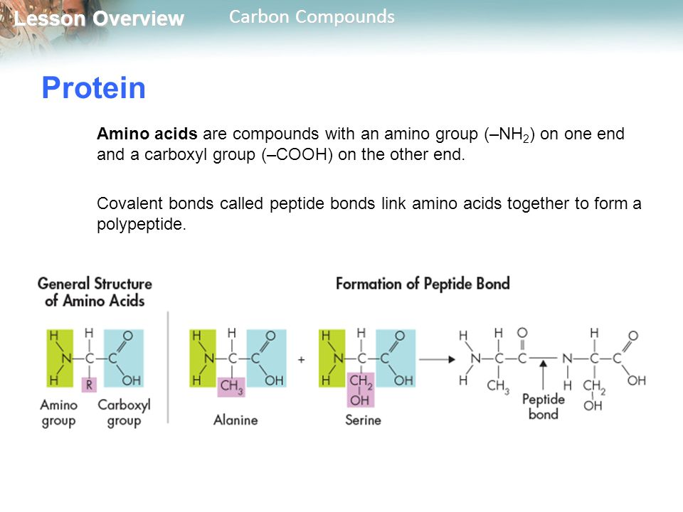 Protein Amino acids are compounds with an amino group (–NH2) on one end and a carboxyl group (–COOH) on the other end.