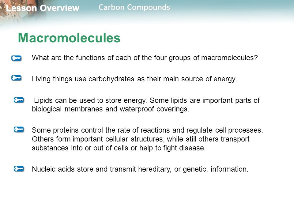 Macromolecules What are the functions of each of the four groups of macromolecules Living things use carbohydrates as their main source of energy.