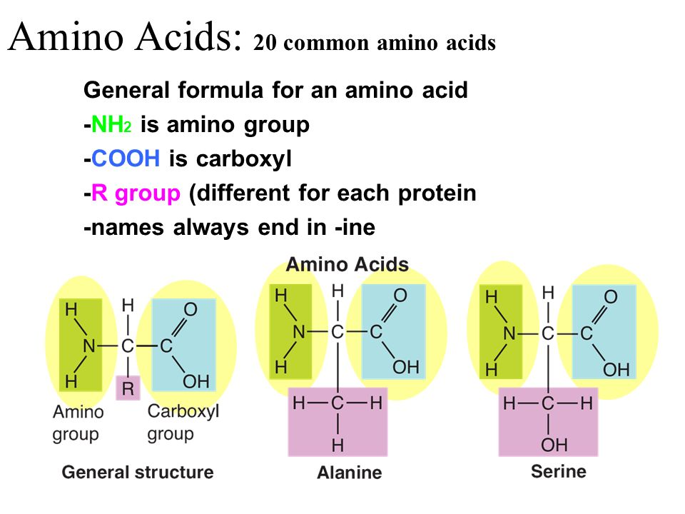 Amino Acids: 20 common amino acids