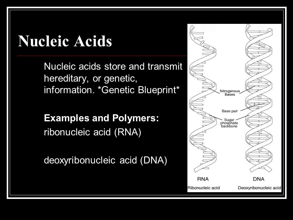 Nucleic Acids Nucleic acids store and transmit hereditary, or genetic, information. *Genetic Blueprint*