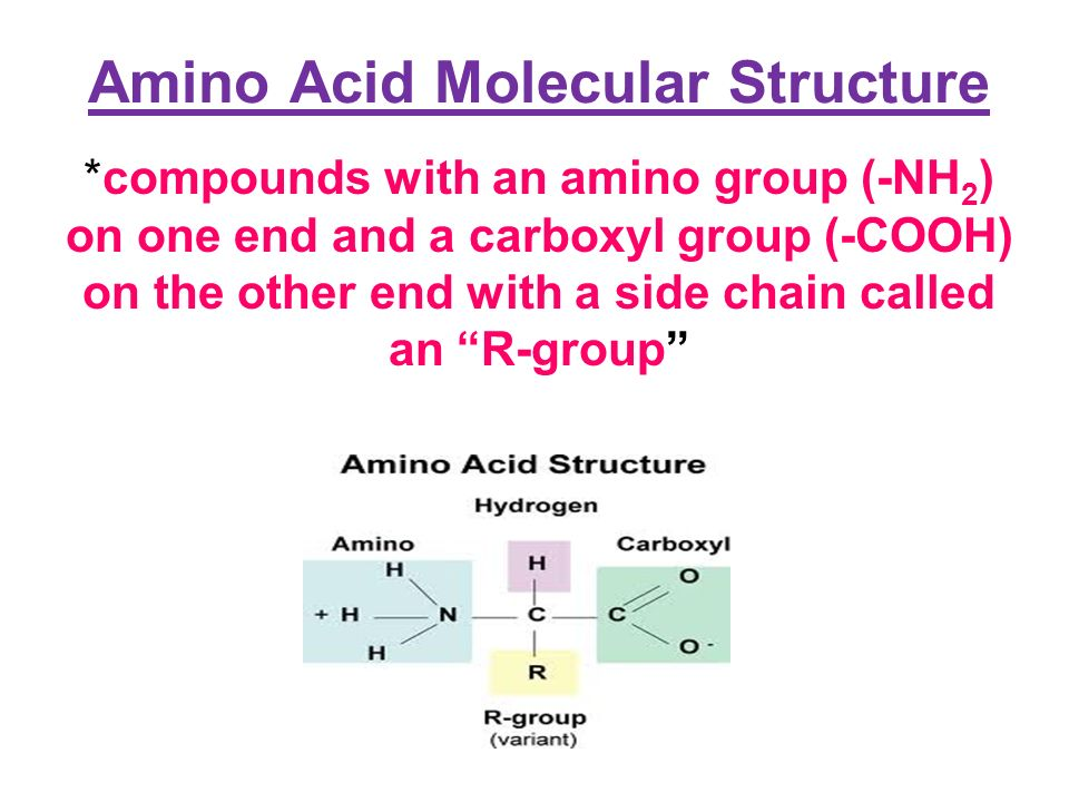 biomolecules another name for a biomolecule is a