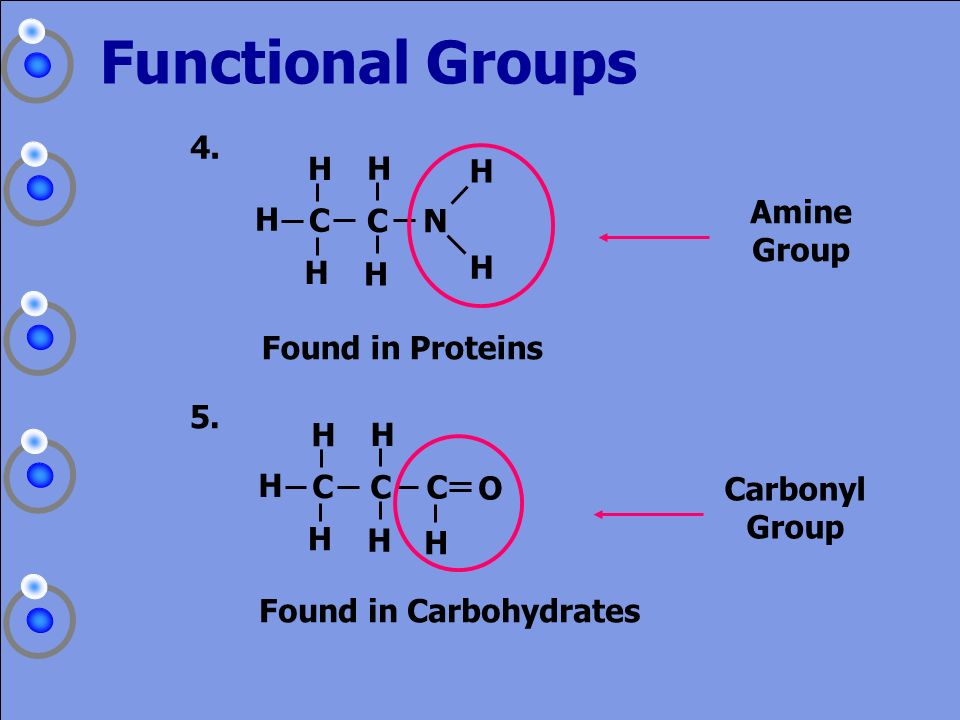 Functional Groups 4. Amine Group C N H Found in Proteins 5. C O