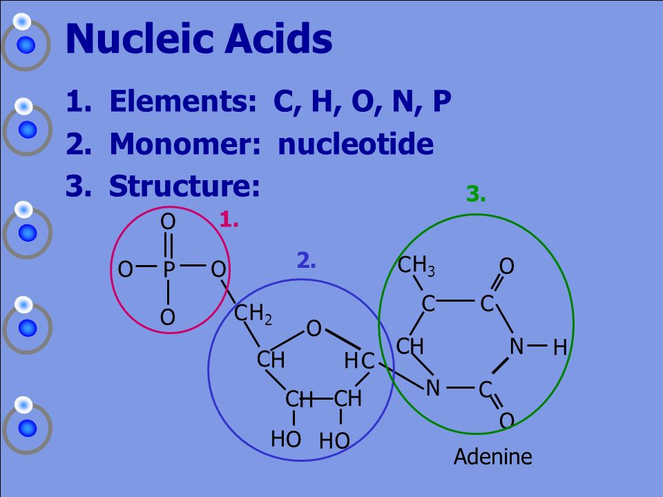 Nucleic Acids Elements: C, H, O, N, P Monomer: nucleotide Structure: