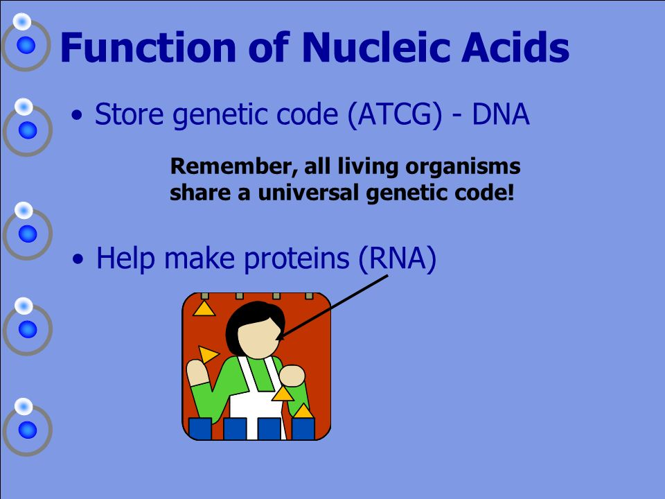 Function of Nucleic Acids
