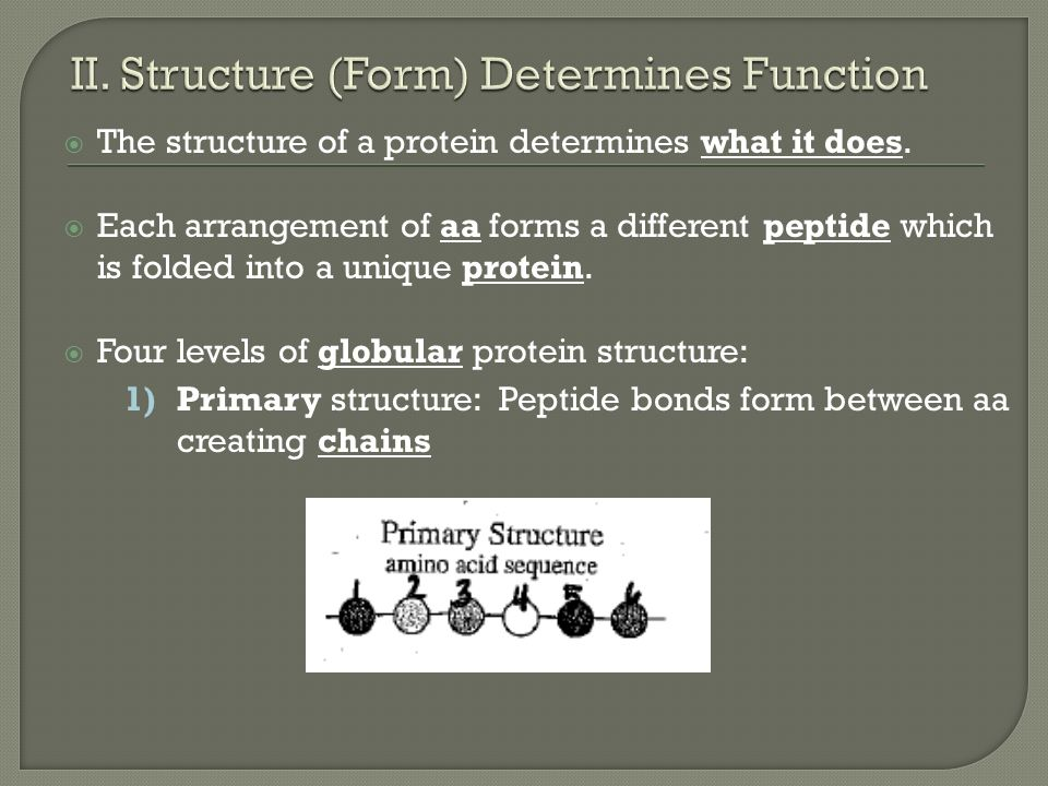 how primary structure determines protein function Protein structure amino acids amino acids are the building blocks of proteins all aa's  • larger than this size, they are called proteins • the structure, function and general properties of a protein are all determined by the sequence of amino  primary structure.