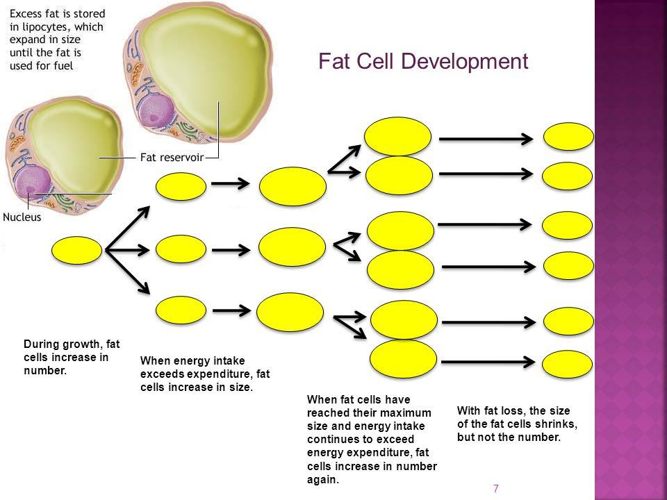 fat loss testosterone