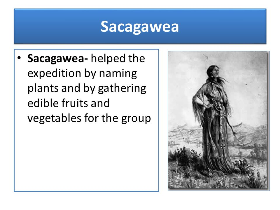 Sacagawea Sacagawea- helped the expedition by naming plants and by gathering edible fruits and vegetables for the group.