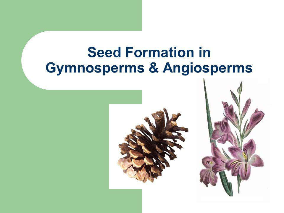 Gymnosperm Vs Angiosperm