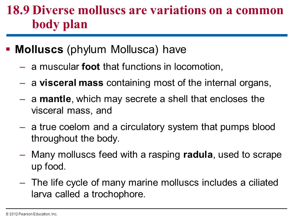 The Evolution of Invertebrate Diversity - ppt download