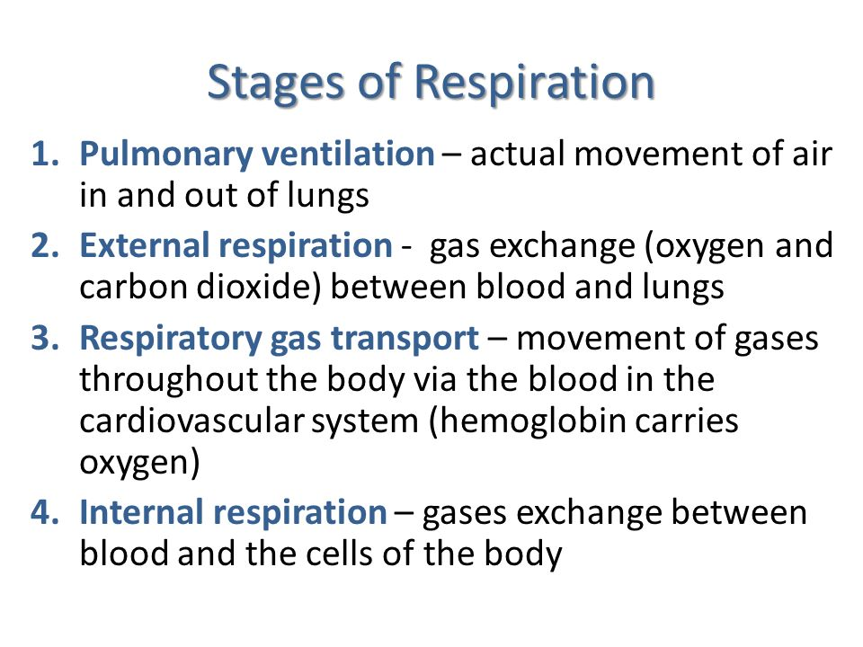 Stages of Respiration Pulmonary ventilation – actual movement of air in and out of lungs.