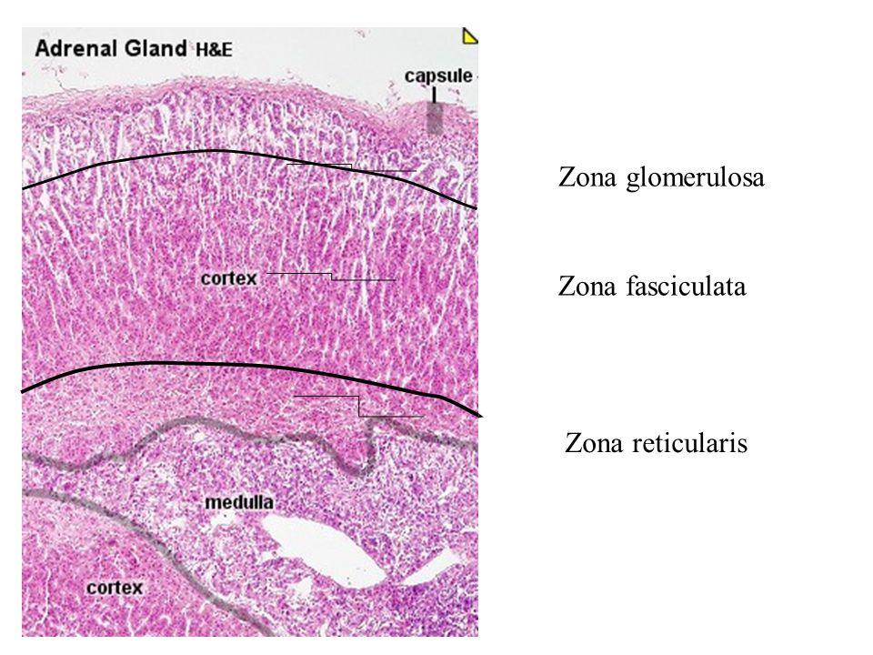 pathology of endocrine disease department of pathology - ppt video, Human Body