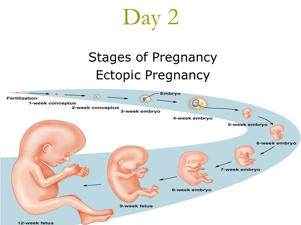 an introduction to the analysis of stages of pregnancy Smoking and passive smoking during pregnancy introduction to smoking during pregnancy the toxins in cigarette smoke may also affect the embryo's growth in the very early stages of pregnancy during pregnancy.
