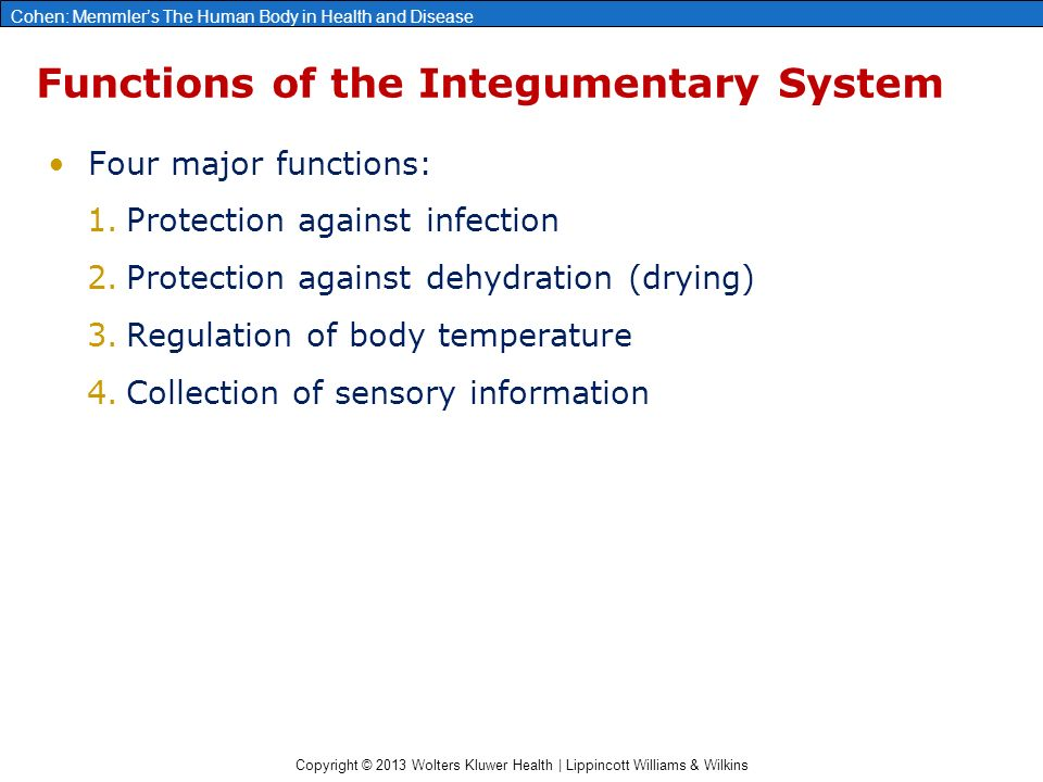 the major function of the integumentary system