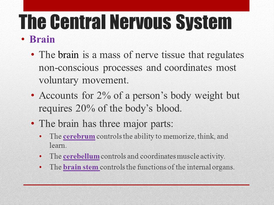 central nervous system parts and functions pdf