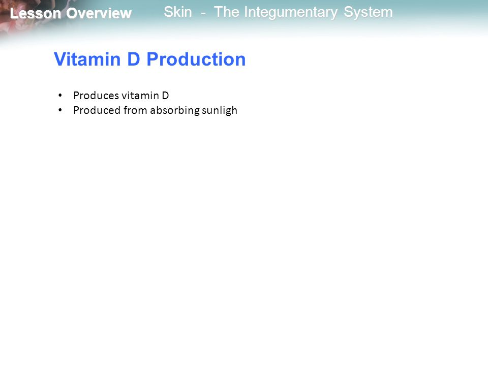 Vitamin D Production Produces vitamin D