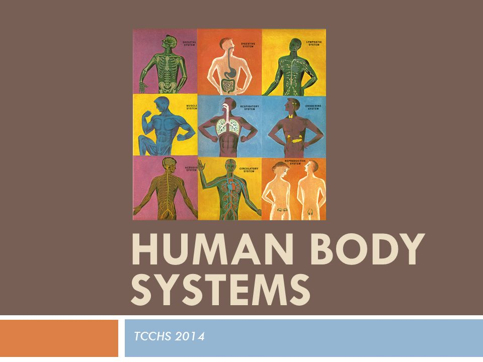 Human Body Systems TCCHS 2014