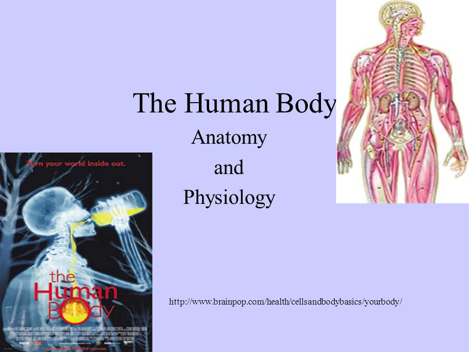 physiology and anatomy of a cell