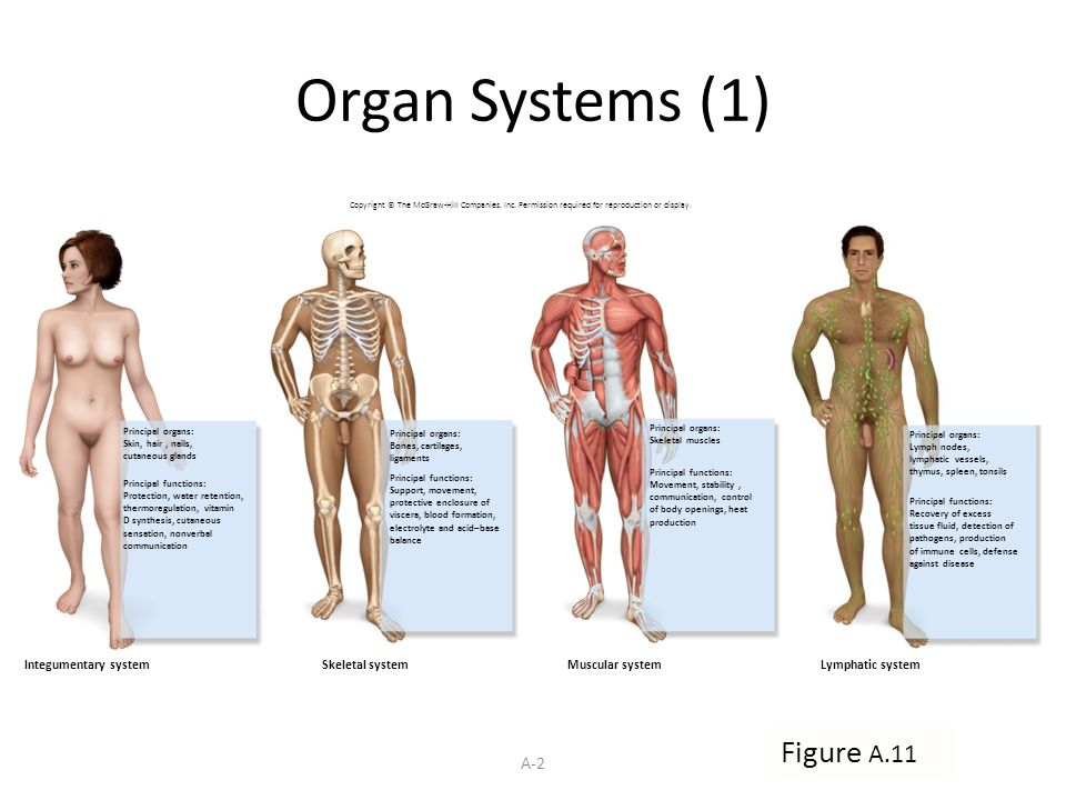 11 Organ Systems Protection Support And Movement Ppt Video