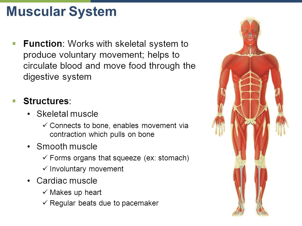 intro to human anatomy organs & organ systems - ppt download, Human Body