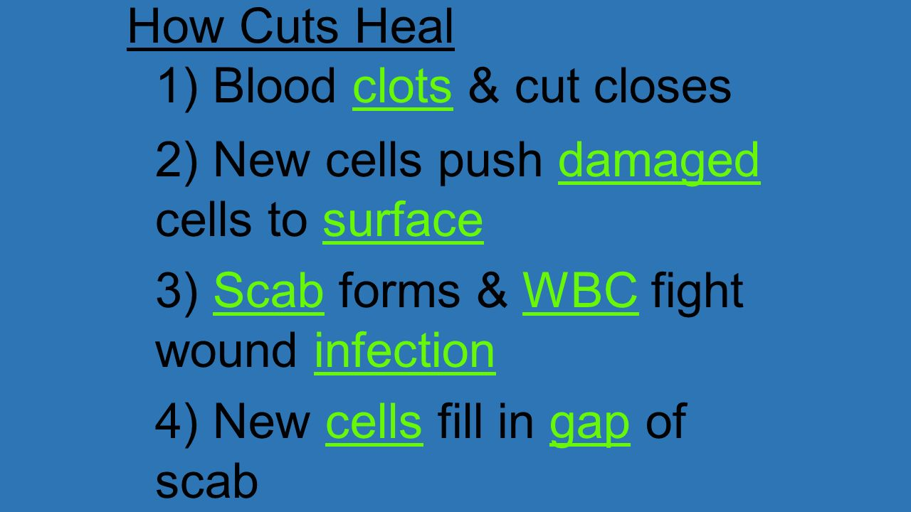 How Cuts Heal 1) Blood clots & cut closes. 2) New cells push damaged cells to surface. 3) Scab forms & WBC fight wound infection.
