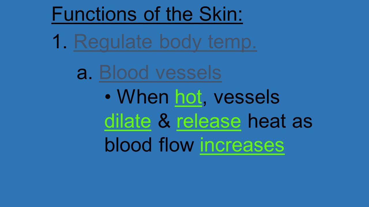 Functions of the Skin: 1. Regulate body temp. a.