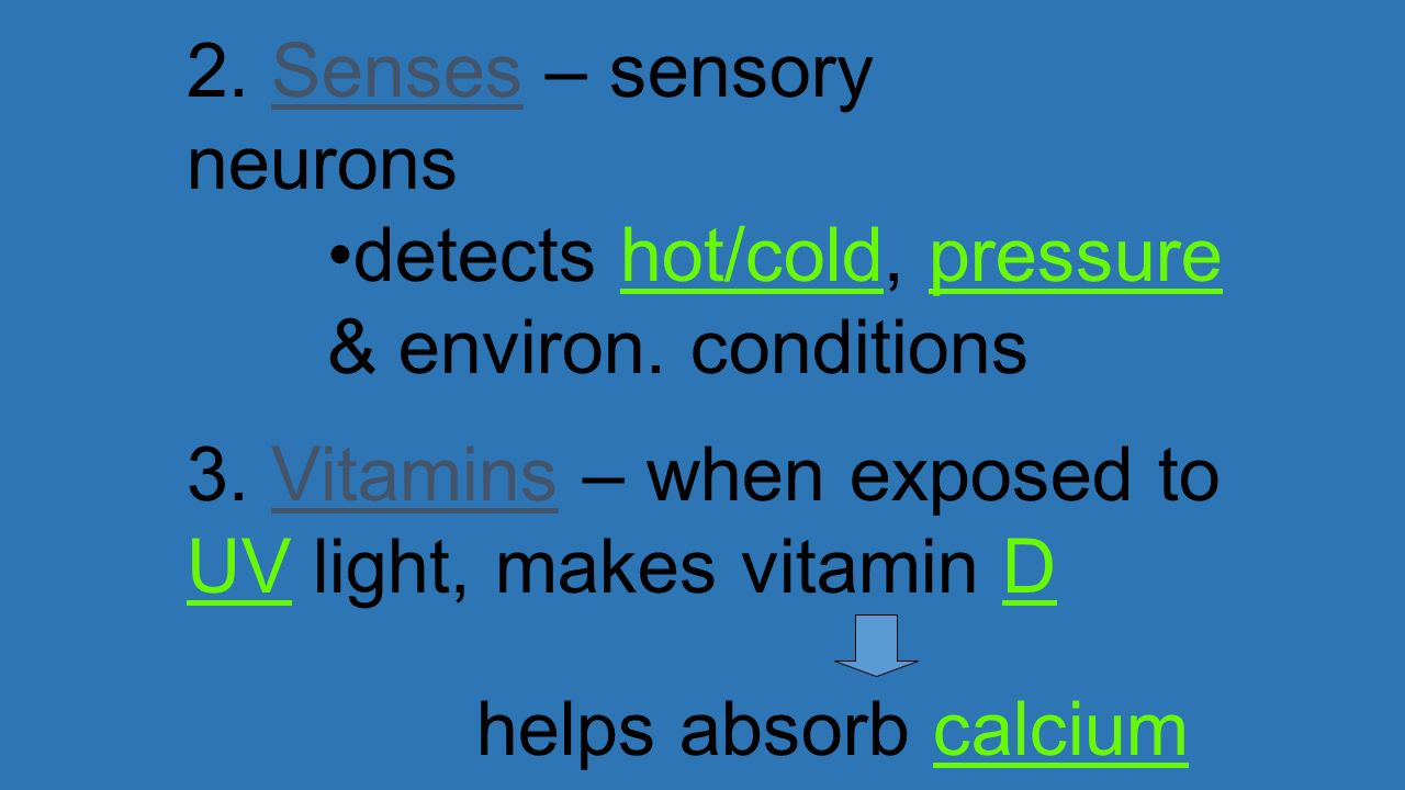 2. Senses – sensory neurons
