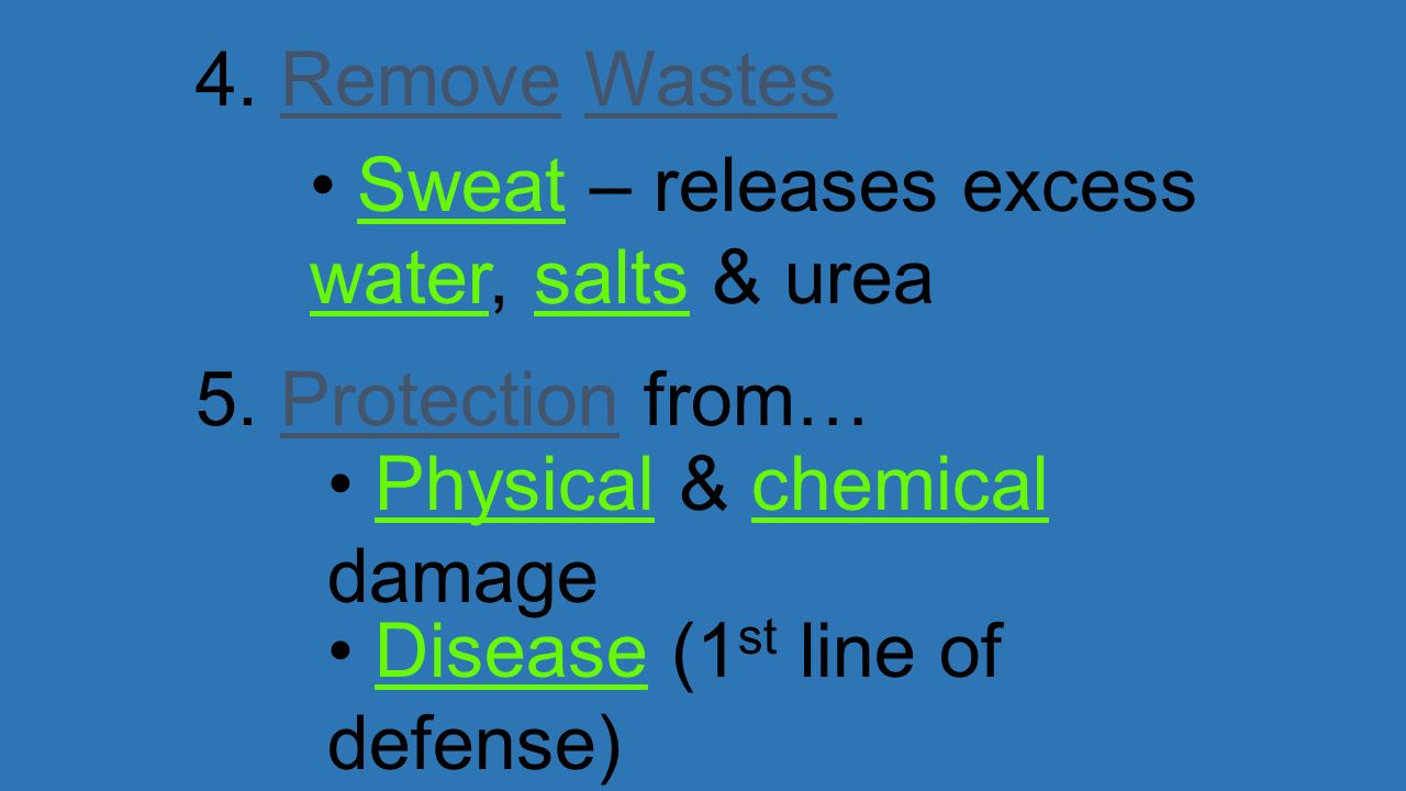 4. Remove Wastes Sweat – releases excess water, salts & urea. 5. Protection from… Physical & chemical damage.