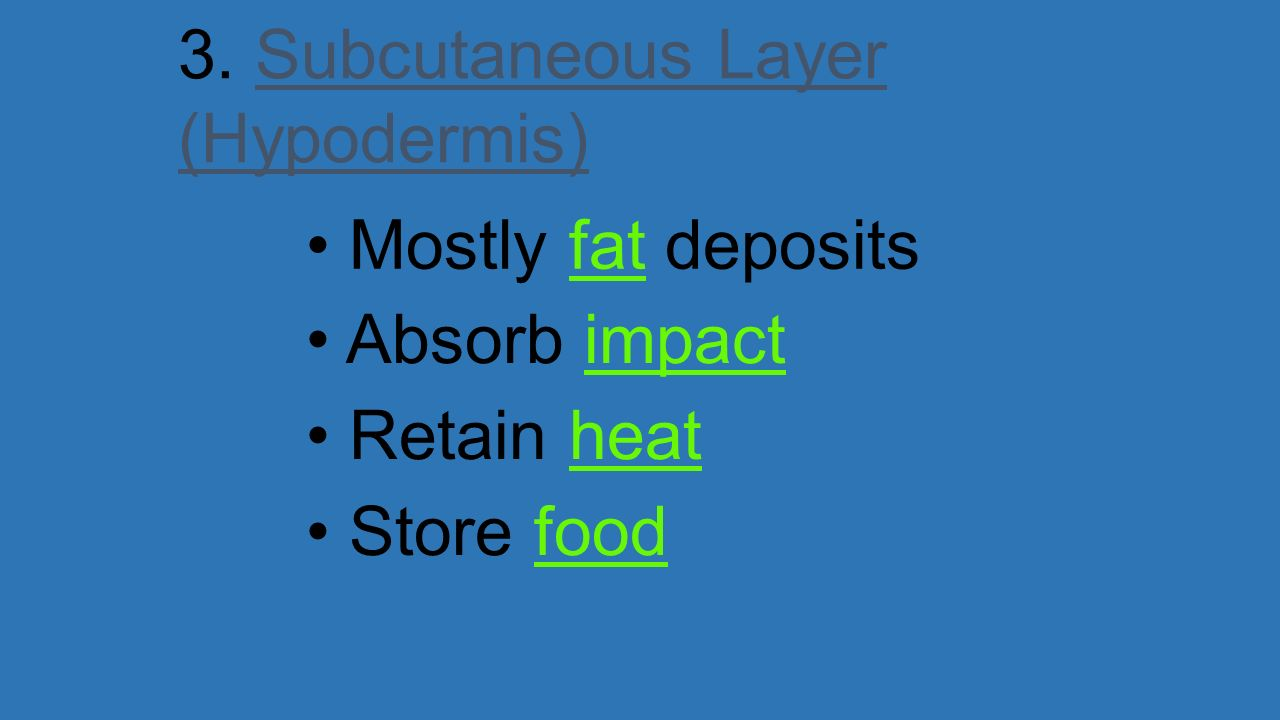 3. Subcutaneous Layer (Hypodermis)