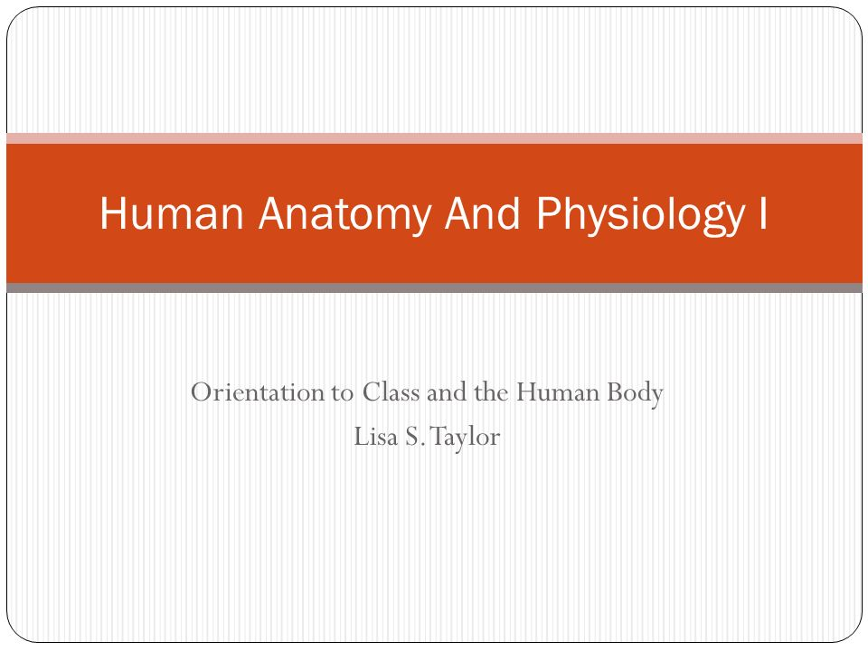 Human Anatomy And Physiology I - ppt video online download