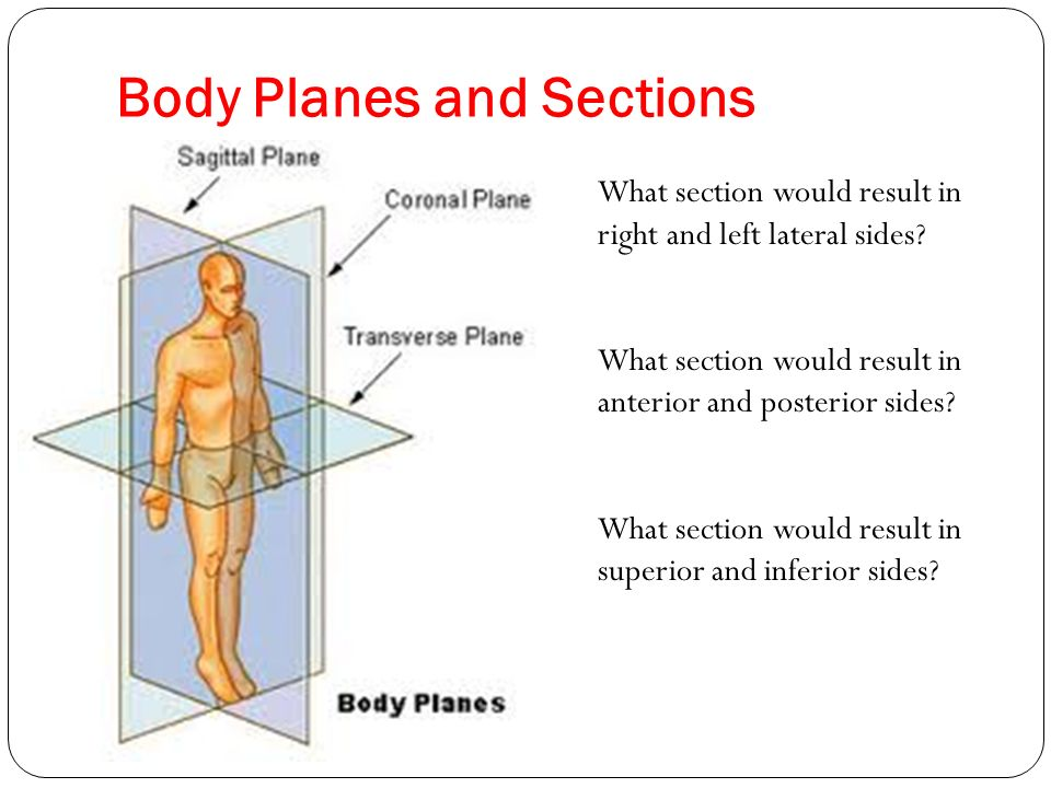 Region Of The Body