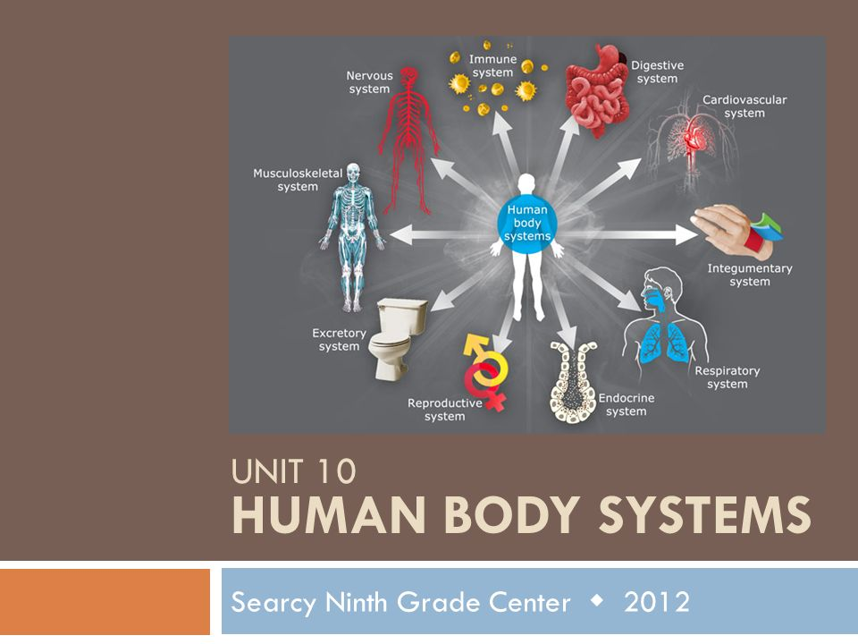 Unit 10 Human Body Systems
