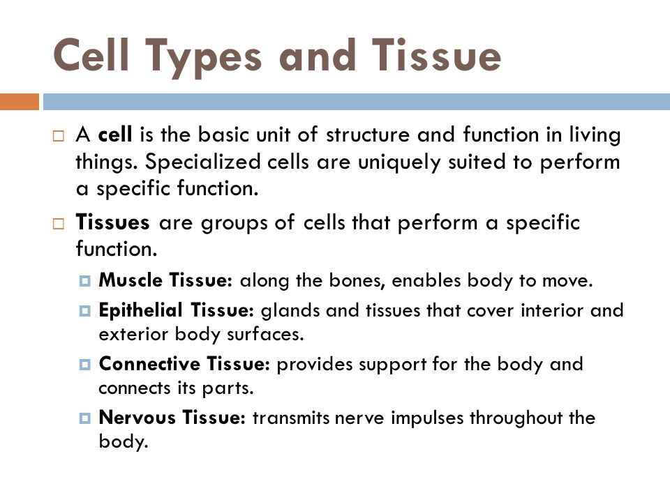 Cell Types and Tissue