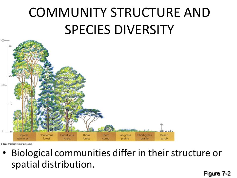 distribution and community structure of coleoptera Effect of crop type on the activity and distribution of ground beetles (coleoptera:  jr spence 1994 community impacts  populations and community structure.