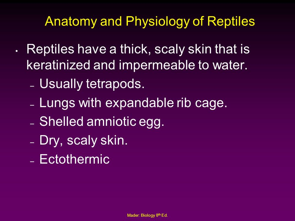 The Deuterostomes Chapter 31 Mader: Biology 8th Ed. - ppt download