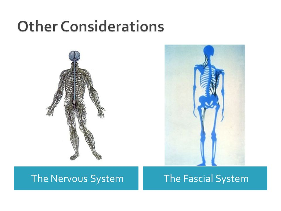 Other Considerations The Nervous System The Fascial System