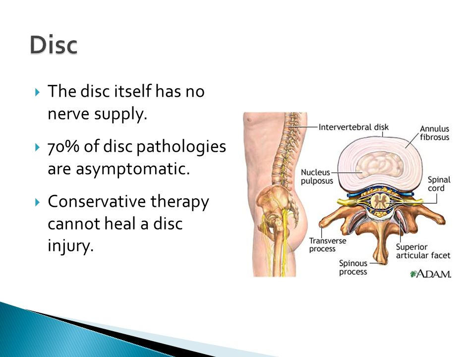 Disc The disc itself has no nerve supply.