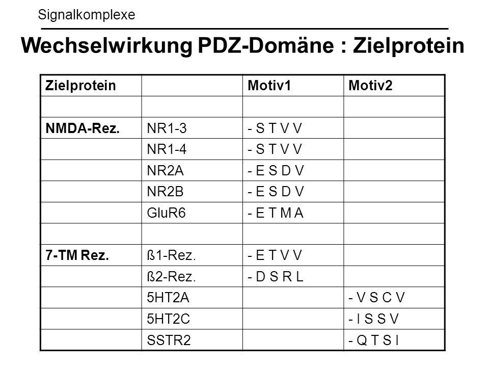 Wechselwirkung PDZ-Domäne : Zielprotein