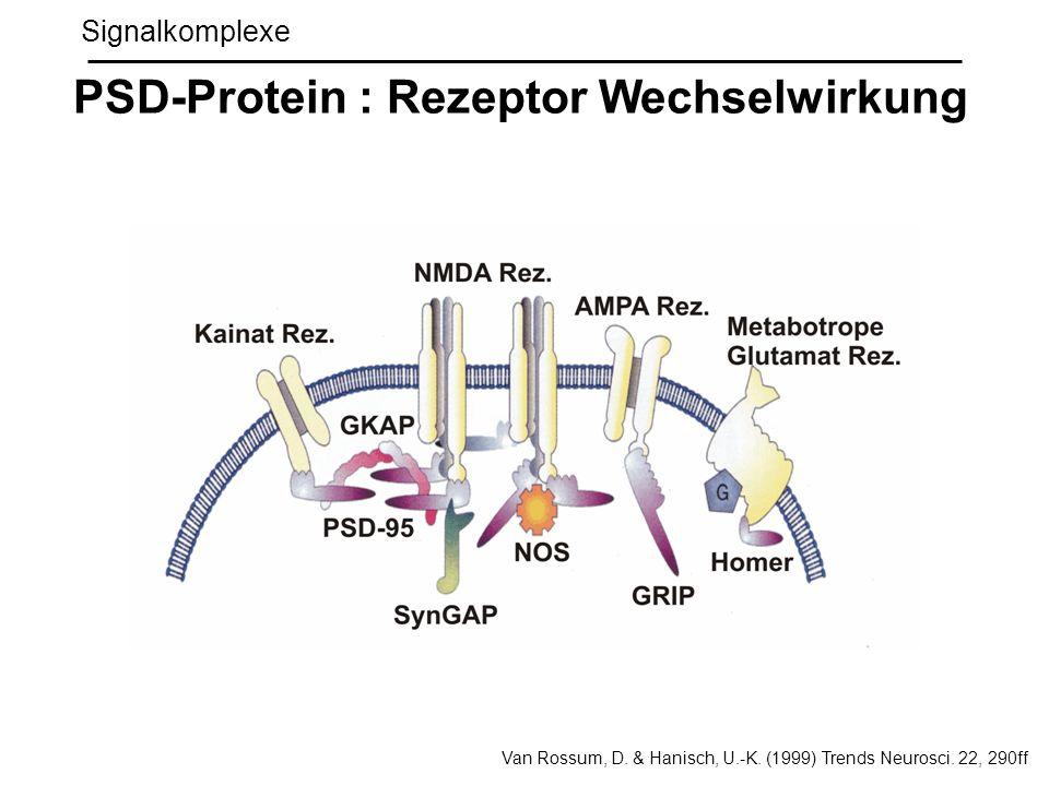 PSD-Protein : Rezeptor Wechselwirkung