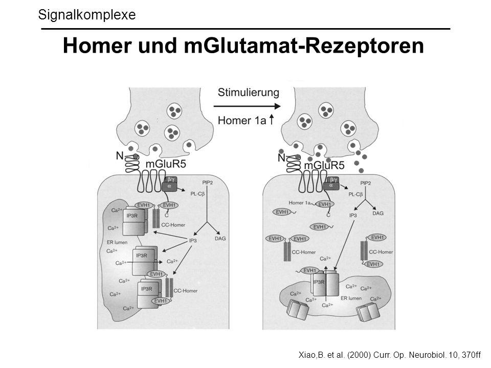 Homer und mGlutamat-Rezeptoren