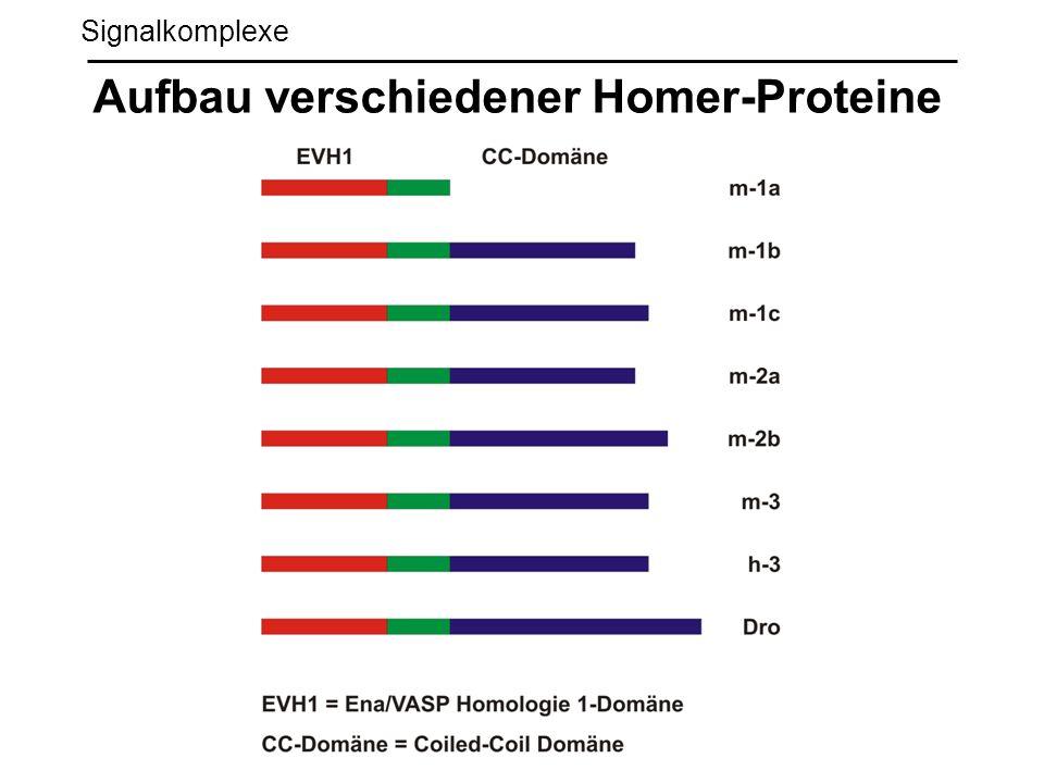 Aufbau verschiedener Homer-Proteine