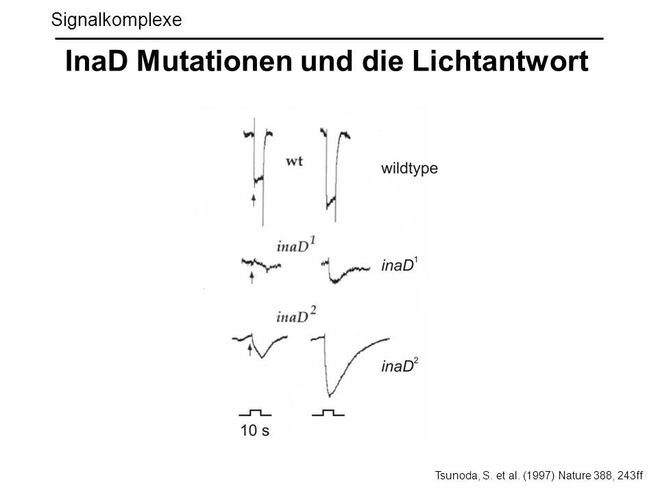 InaD Mutationen und die Lichtantwort